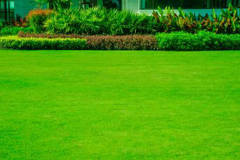 How to get the perfect lawn