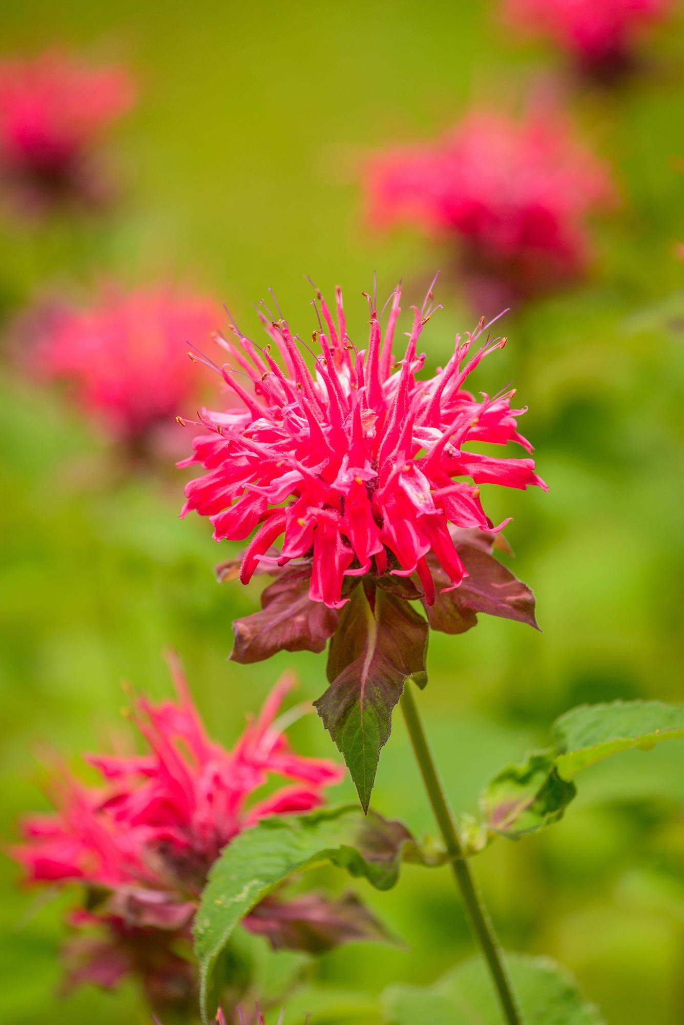 butterfly bee plants flowers