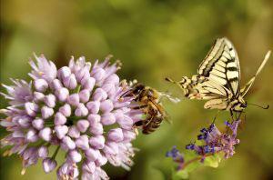 Bees butterfly garden