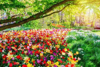 colourful spring flowers