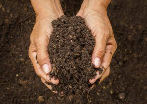 How to prepare soil for planting