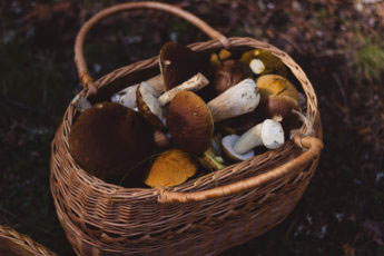 small basket used to forage