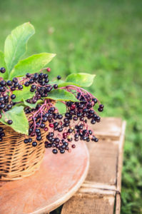 elderberries in a basket