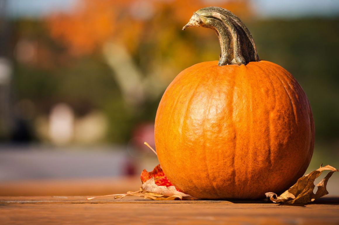 grow pumpkins in october