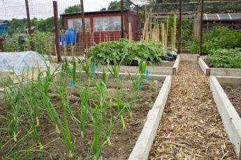 garden vegetable plot