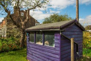 STIHL purple shed felt roof
