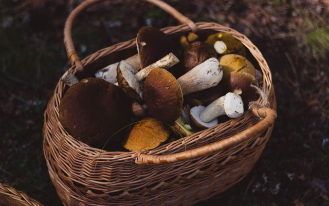 FOREST FORAGING GUIDE