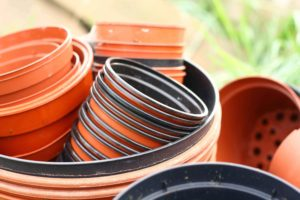 Plant Pots from Greenhouse