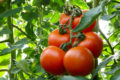 Five fruit and veg to grow in your greenhouse