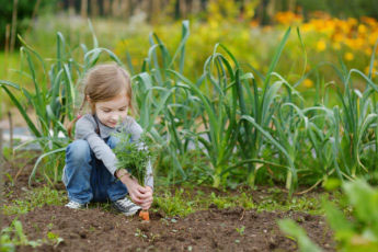 Girl Picking Carrots - Kids Garden