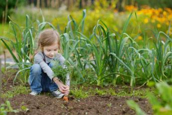 Girl Picking Carrots - Kids Garden