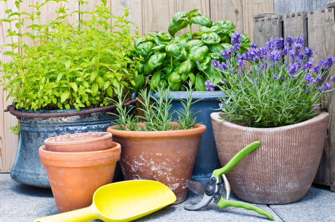 urban gardening with clay pots