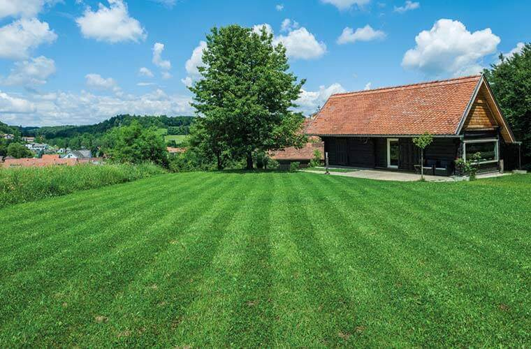 The summer lawncare masterclass