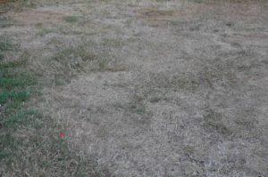 Summer Lawncare Drought