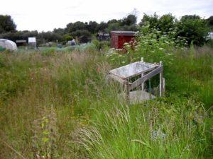 Overgrown Allotment Garden