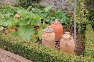 Rhubarb Forcing Jars