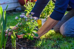 Mulching flower beds