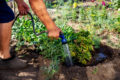The ultimate guide to creating a water-efficient garden