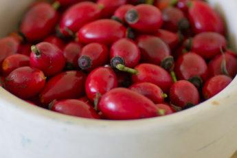rosehip bowl