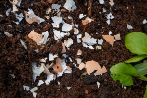 create a slug free garden by spreading crushed egg shells