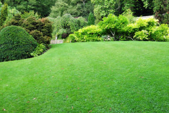 lush green lawn after scarifying your lawn