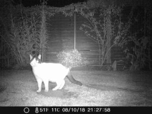 wildlife night camera