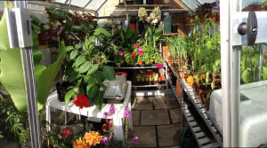 a greenhouse full of plants