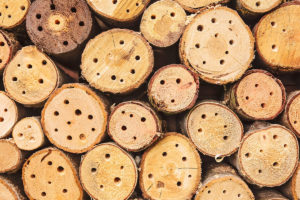 Logs with drilled holes for bee hotel