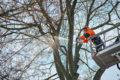 Top-handle chainsaws. By STIHL.