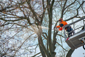 Arborist @ Work with MS201T
