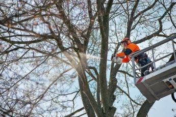 Arborist @ Work with MS201T