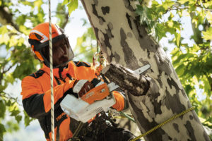 MSA 161 Battery Powered Arborist Saw
