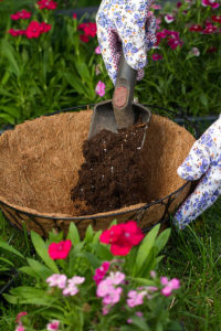 Planting a hanging basket using compost