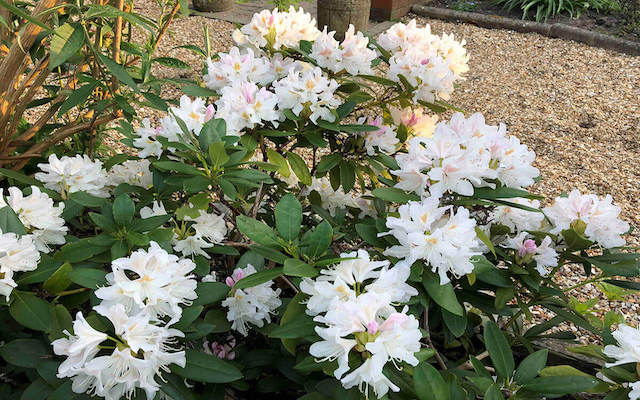 Star Plants For May