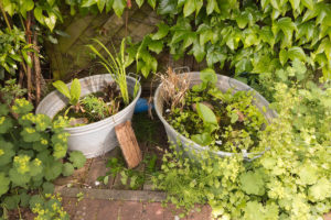 Pond In a Pot
