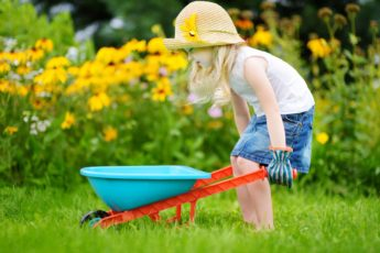 Child With Colour Wheelbarrow In Garden