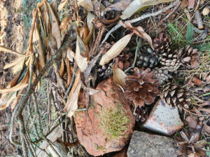 items to build a wildlife den in your garden