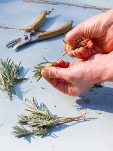 How do i take soft cuttings