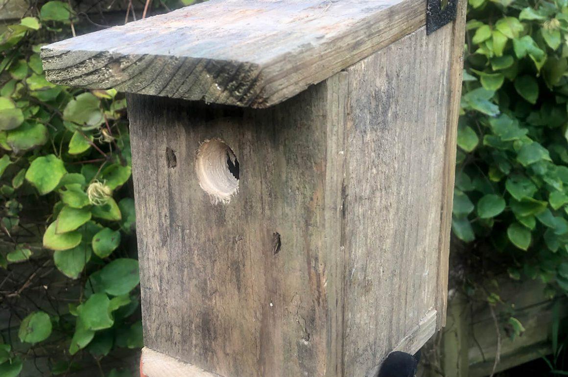 completed birdbox