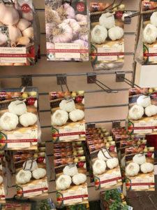 garlic on sale at a garden centre
