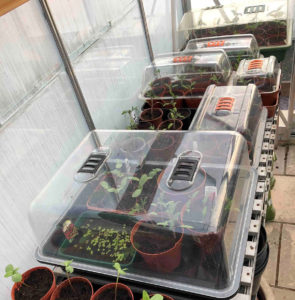 install and activate green house heaters to stop your plants dying