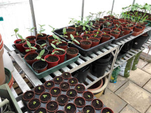 Using Peat Free Compost In Your Garden
