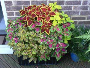 planting flower pots in your garden