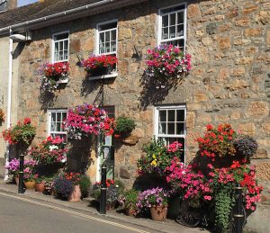 how to grow hanging baskets in your garden