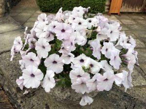 use quality compost in your plant containers and hanging baskets