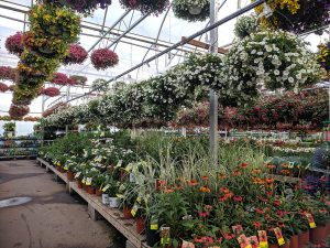 a nursery is a great place to pick up summer bedding plants
