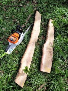 STIHL battery powered chainsaw used to cut bat roosts