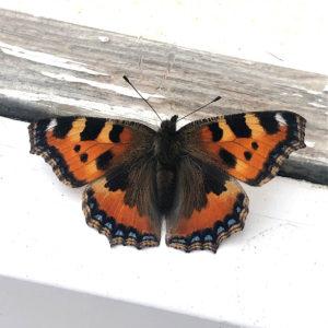 lure butterflies into your garden