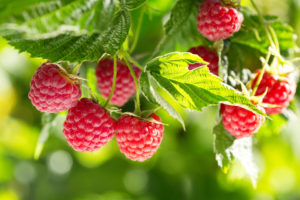 how to make raspberry syrup